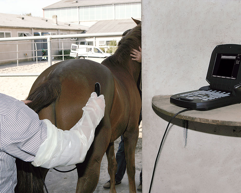 exago in use horse